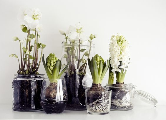 Chic Ways to Display Your Hyacinths