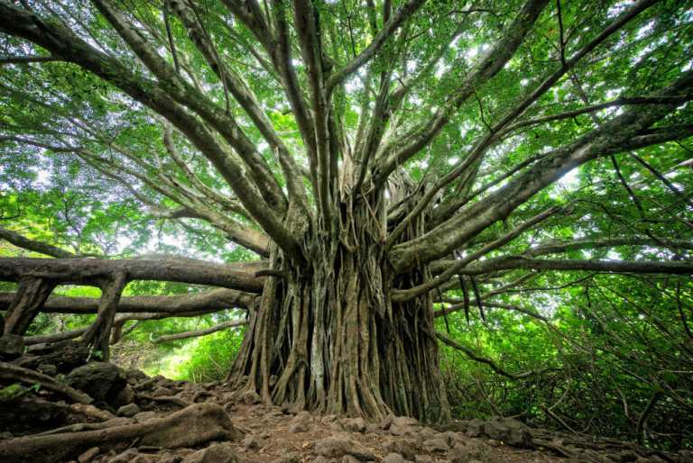 Imagen de un precioso árbol