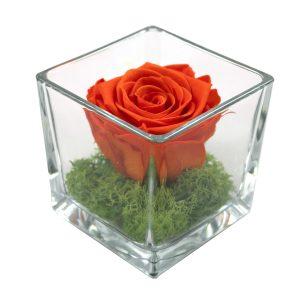 rosa stabilizzata arancione in cubo su muschio verde in cubo di vetro