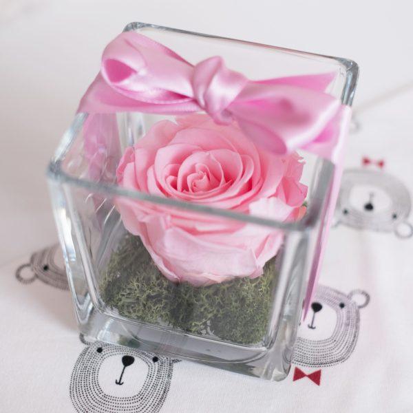 bomboniera con rosa stabilizzata in cubo di vetro di color rosa baby. Con fiocco rosa. Su letto di muschio verde stabilizzato.