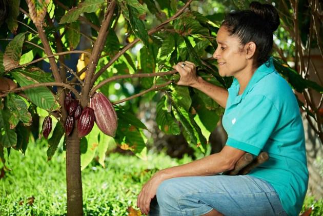 plantation de cacao équitable