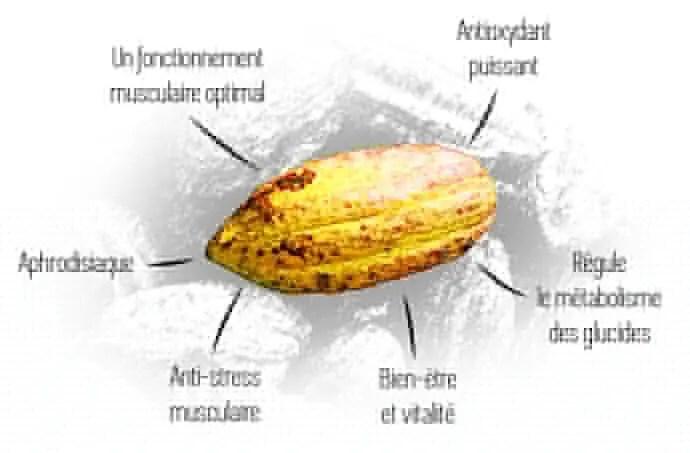 bienfaits du cacao cru