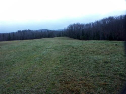 Grassy field site