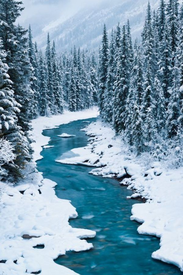 Winter Photography Inspiration - River in the Snowy Woods | https://www.roseclearfield.com