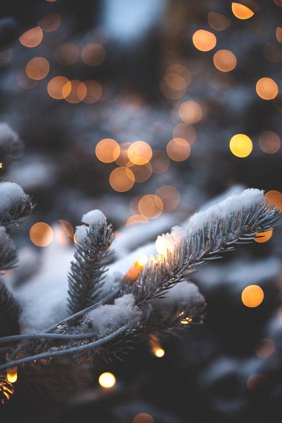 Winter Photography Inspiration - Winter Bokeh | https://www.roseclearfield.com