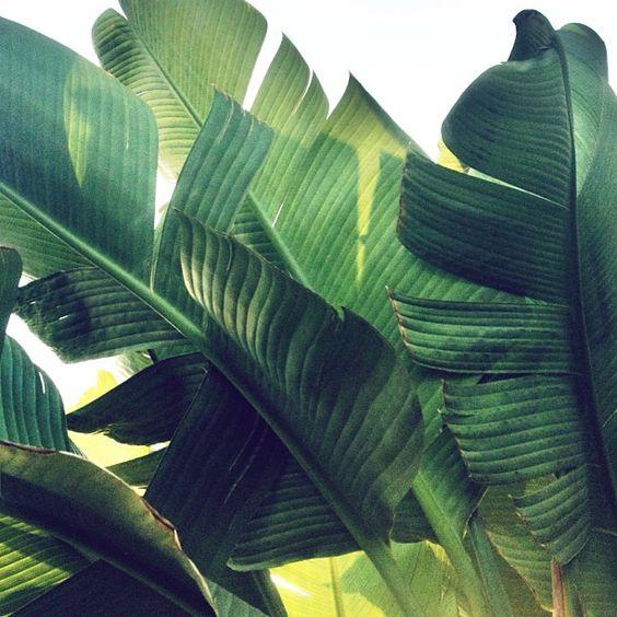 Palm Tree by Jonathan Lo happymundane on Instagram https://www.instagram.com/p/Yoha9FwjGI | http://www.roseclearfield.com