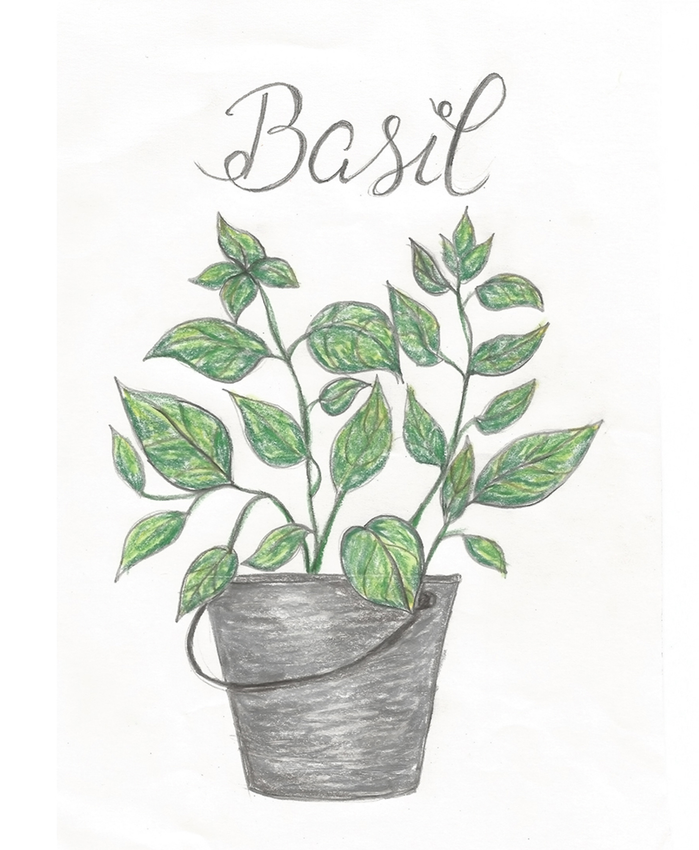 Free Summer Printables - Basil via Shades of Blue Interiors | https://www.roseclearfield.com