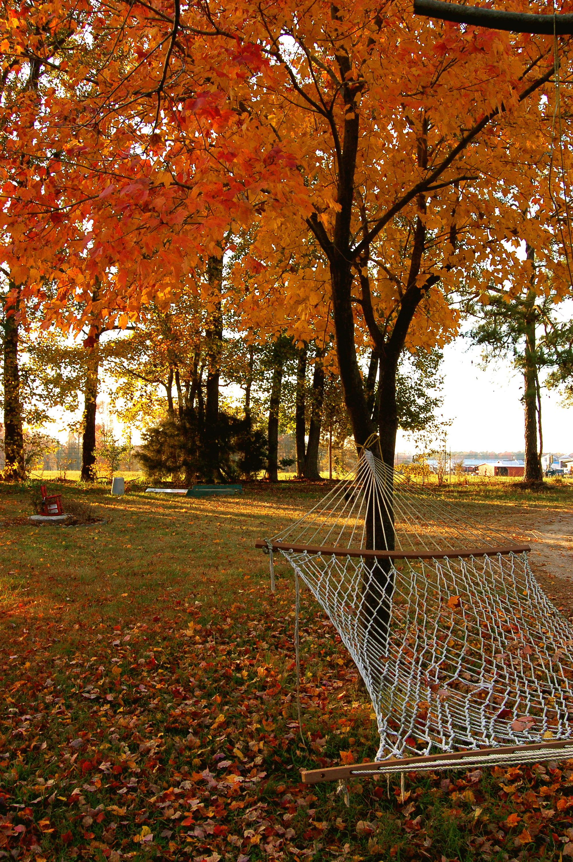 20 Creative Fall Photography Ideas - Fall Hammock by Taber Andrew Bain via Flickr | https://www.roseclearfield.com