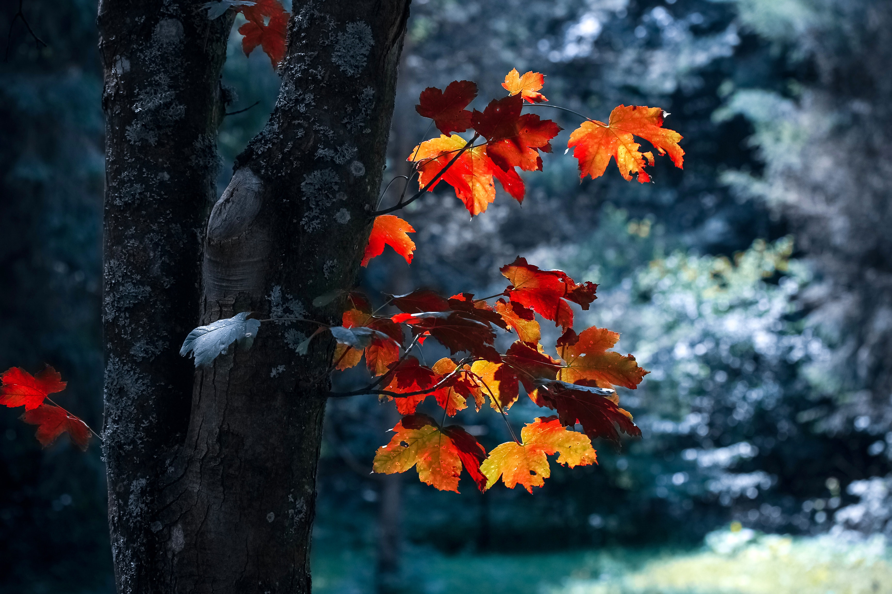 20 Creative Fall Photography Ideas - Autumn Leaves by Vali S. via Pexels | http://www.roseclearfield.com