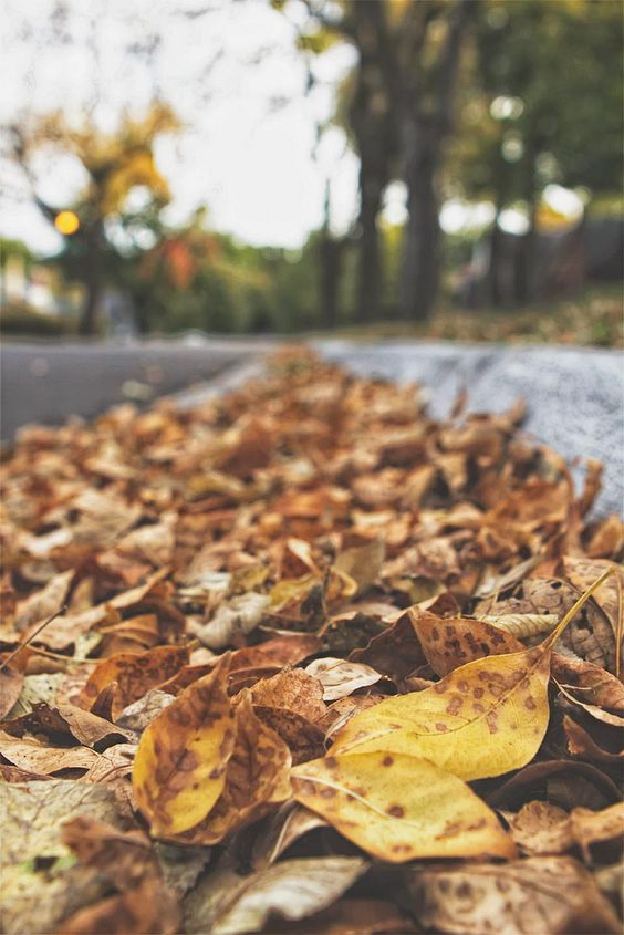 Fall Photo Inspiration - Fall Leaves by Meghan Davidson via Flickr | https://www.roseclearfield.com