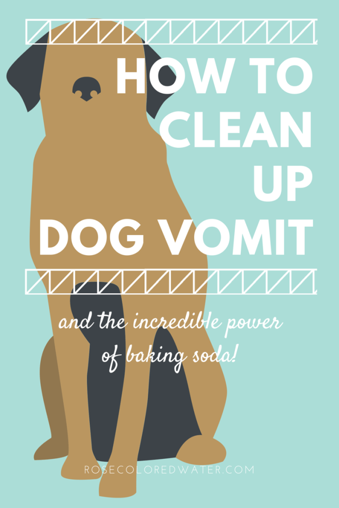 How to clean up dog vomit with baking soda