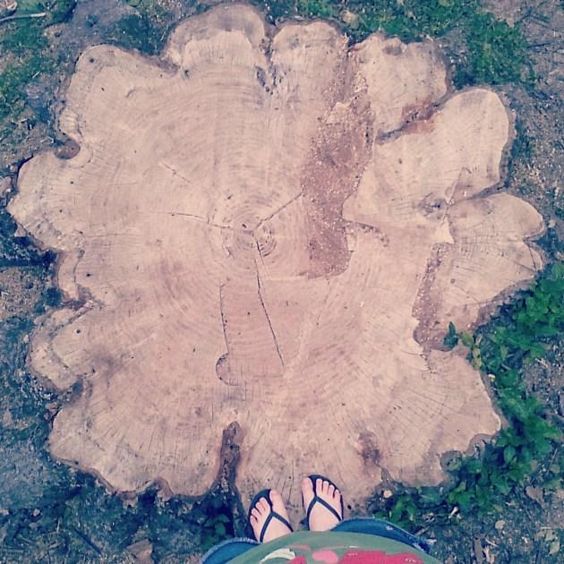 Sad tree | Laumeier Sculpture Park