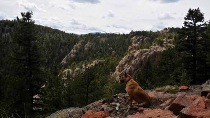 Staunton State Park   Colorado