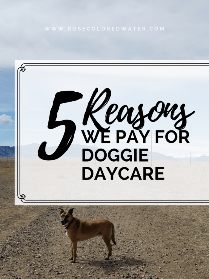 Want your dog to be happy? Pay for doggie daycare. Here's why we do it. | Rose Colored Water #dogs #happydogs #pups
