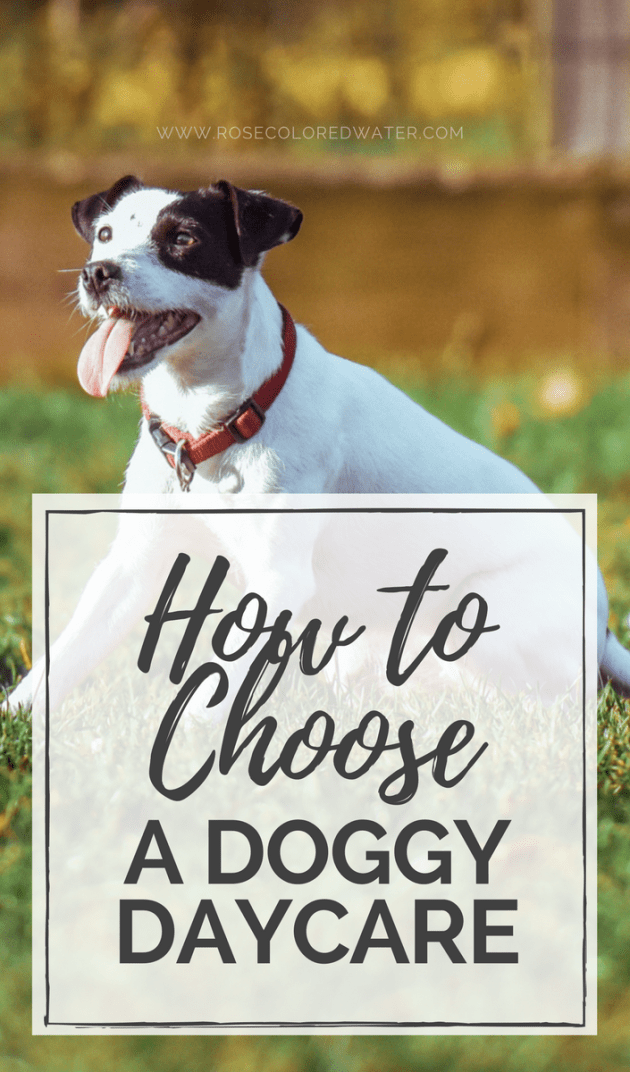 How to Choose a Doggy Daycare | Rose Colored Water