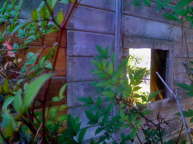 Consultation Registration Form photo of lit window of old wood tank house on the farm with potato vines growing in front