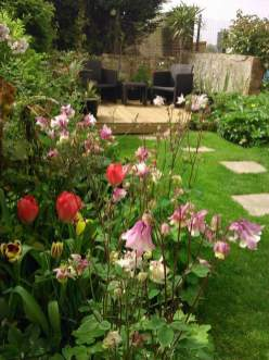 Aquilegia and Tulips adding welcome spring colour
