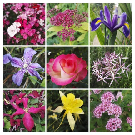 A selection of summer flowers