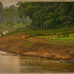 farm on the banks of the Mekong
