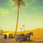 Morocco: a Barb horse hitched to a wagon waits near Rissani market