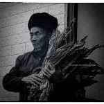 Elderly Chinese man holds sheaf of tobacco leaves