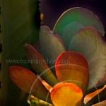 succulent plants display colors of a Mexican fiesta