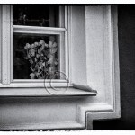 flowers in the window of a Russian home