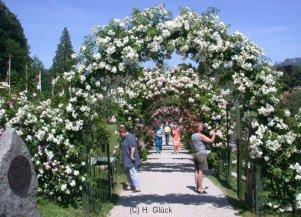 Rosenbogen-am-Eingang