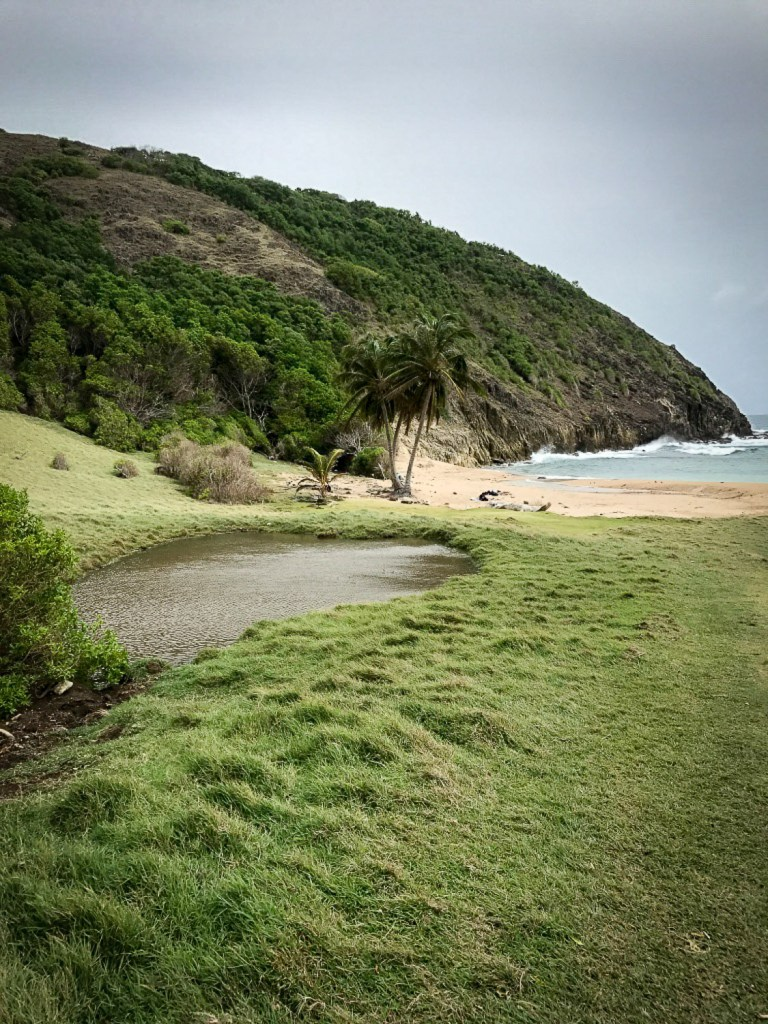 nature_beach_Anse_Rodrigue_Guadeloupe_Saintes