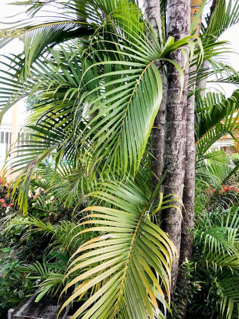 préparer_séjour_Guadeloupe_indispensables