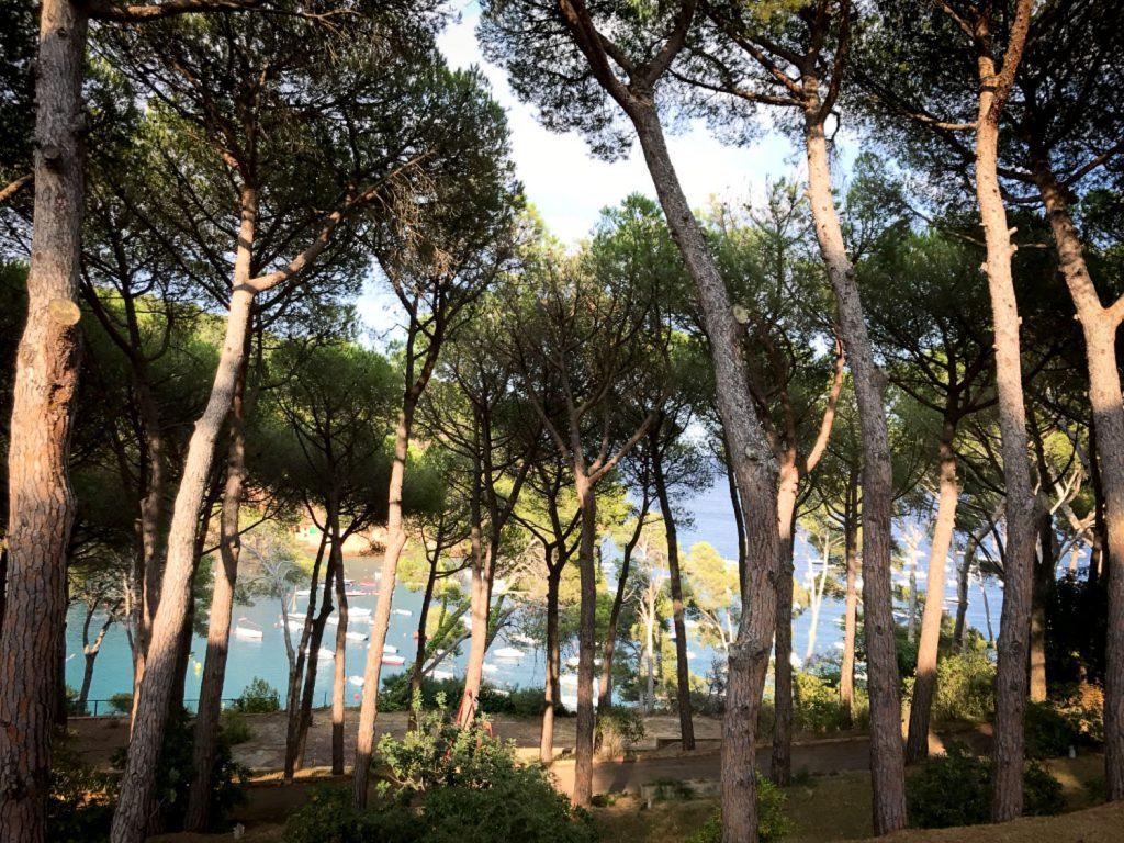 view_to_Tamariu_beach