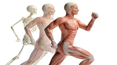 kinesiology in the skeletal running form