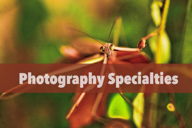 photography Specialty Prices