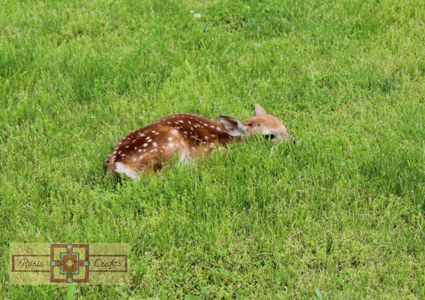 Rosie Crafts Baby Deer Photography