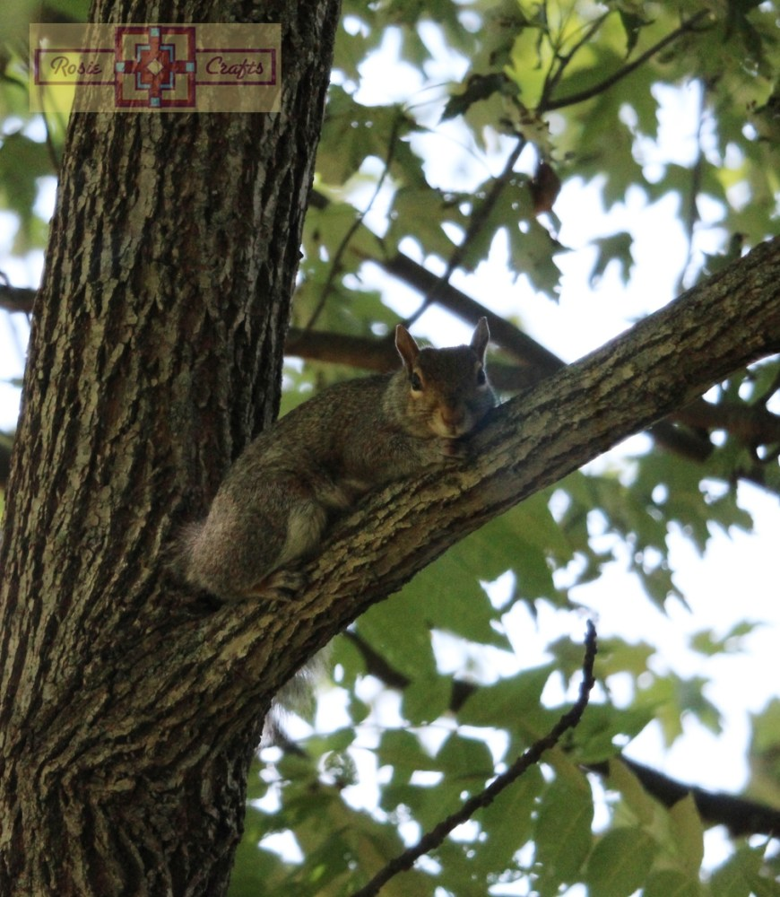Rosie Crafts Squirrel In Tree Photography