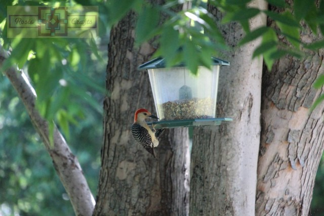 Rosie Crafts Woodpecker Feeding Time Photography