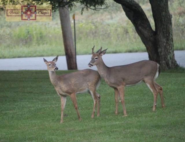 Rosie Crafts Doe & Buck Deer Photography