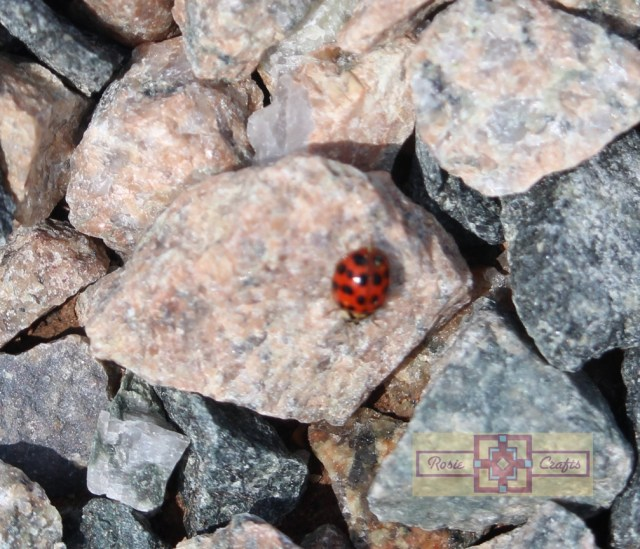 Rosie Crafts Lady Bug Photography