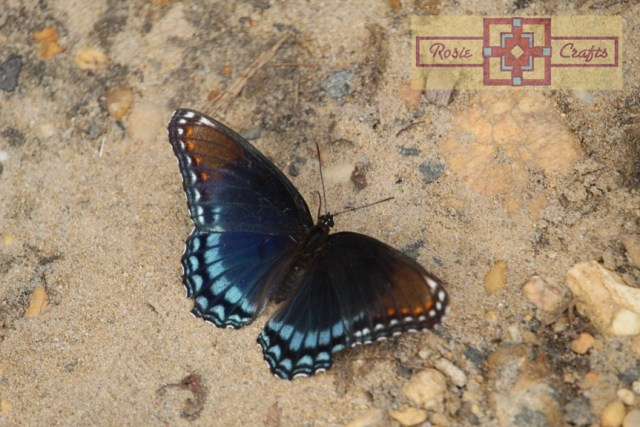 Rosie Crafts Swallowtail Butterfly Photography