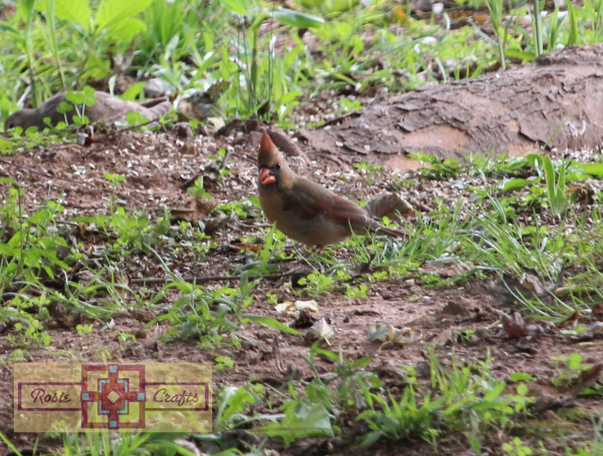 Rosie Crafts Female Cardinal Photography
