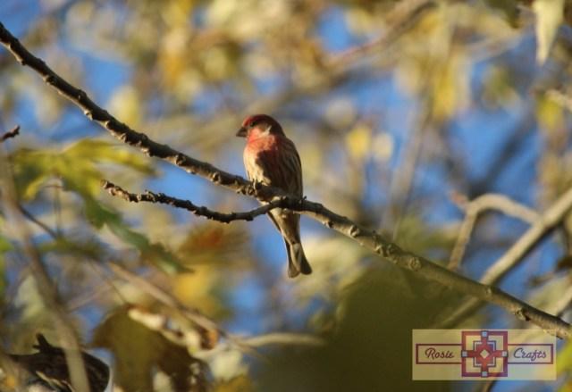 Rosie Crafts Finch Bird Photography