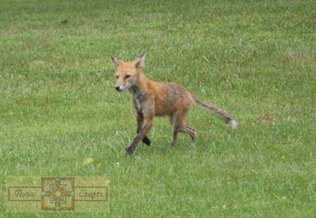 Rosie Crafts Fox Photography