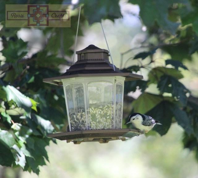 Rosie Crafts Nuthatch Bird on Feeder Photography