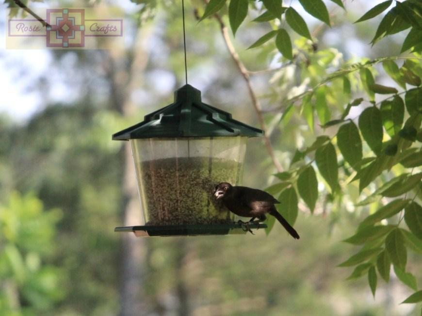 Rosie Crafts Starling Bird Photography