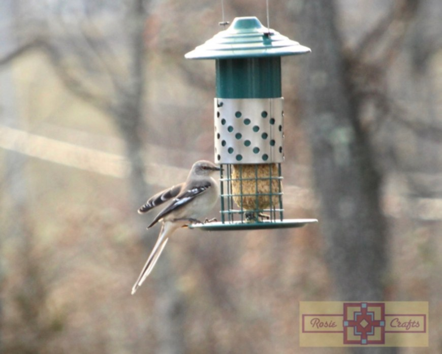 Rosie Crafts Great American Mockingbird Eating Peanut Suet Photography