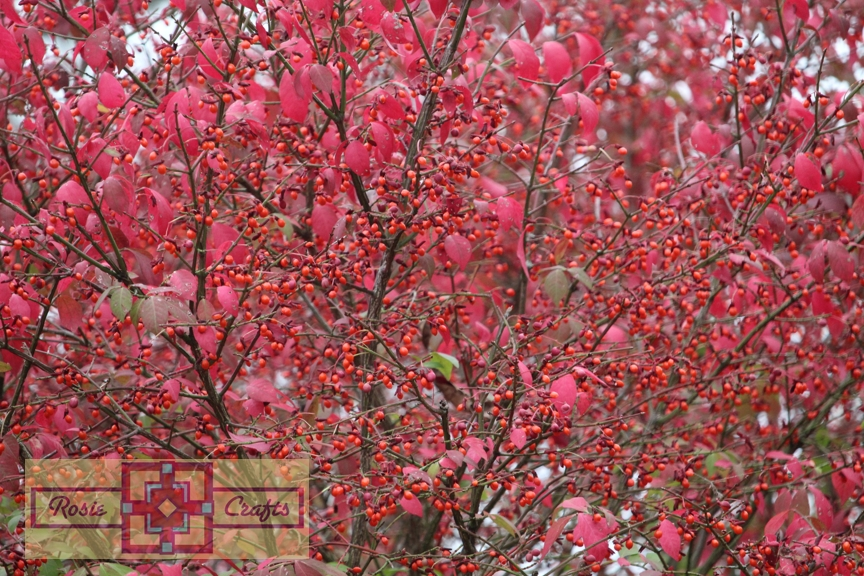 Rosie Crafts Autumn Berry Bush Tree Photography