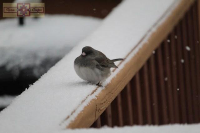 Rosie Crafts Dark Eyed Junco Bird In Snowy Winter Photography