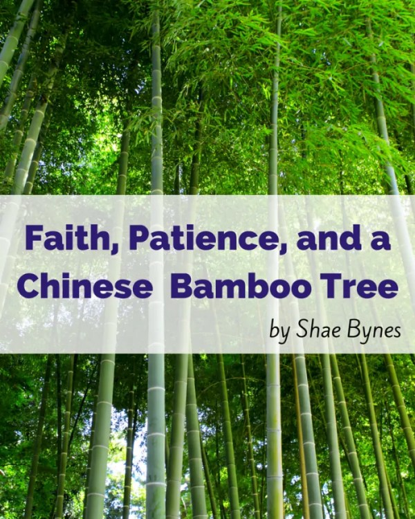 Faith and patience are like a Chinese Bamboo Tree.