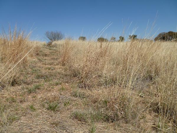 Tall grass 1