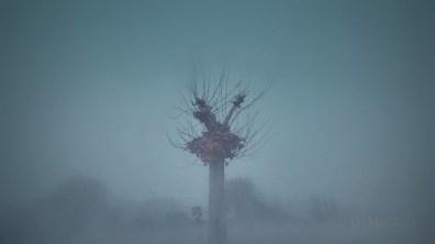 Inner fog